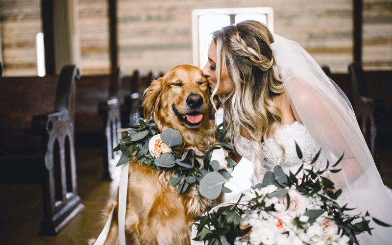 cane al matrimonio che accompagna la sposa